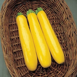 Gold-Rush-Yellow-Squash